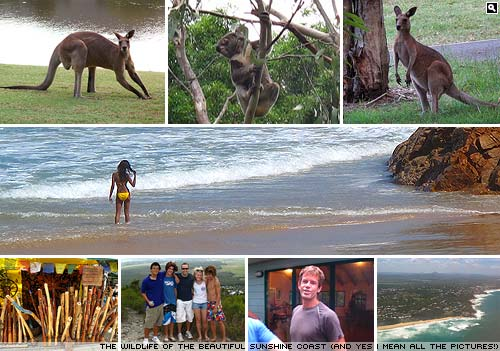 Pictures from Coolum on the Sunshine Coast.